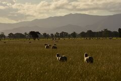Free Countryside Landscape With Sheep And Mountains Royalty Free Stock Photos - 169237238