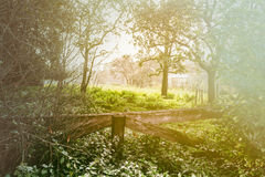 Countryside landscape with wooden fence Royalty Free Stock Image