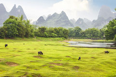 Countryside landscape in Yangsho Stock Image