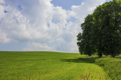 Countryside landskape field and tree. With sky Stock Photography