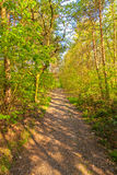 Countryside lane lined with lush green trees Royalty Free Stock Photography