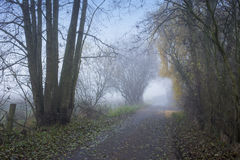 Countryside lane misty morning Royalty Free Stock Images