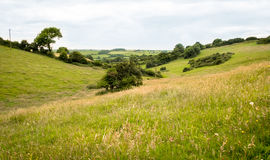 Countryside Lanscape. Long distance view through a valley of fields in summer. Long grasses prevail and, the land is primarily used for grazing cattle Royalty Free Stock Photo