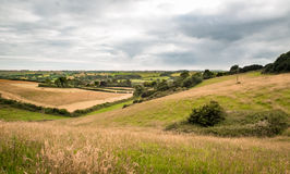 Countryside Lanscape. Long distance view through a valley of fields in summer. Long grasses prevail and, the land is primarily used for grazing cattle Stock Photography
