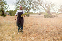 Countryside life, Chef cook, picking herbs. Royalty Free Stock Image