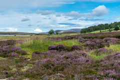 Countryside at Lochindorb Royalty Free Stock Photography