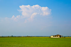Countryside. A lone house sitting amidst padi fields. The horizon shows the massive flat lands in the area. A blur sky with a huge cloud overseeing the vast land stock images