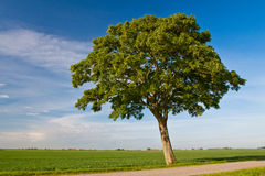 Free Countryside Meadow And Tree Stock Photo - 9737230