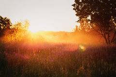 Countryside meadow in beautiful sunset Stock Image