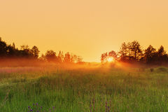 Countryside meadow in beautiful sunset Royalty Free Stock Photo