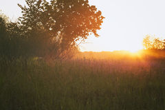 Countryside meadow in beautiful sunset Stock Photos