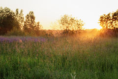 Countryside meadow in beautiful sunset Royalty Free Stock Images