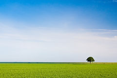 Countryside meadow and tree. Countryside meadow and small tree Stock Photos
