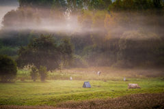 Countryside in misty morning Stock Images