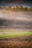 Countryside misty morning Stock Image
