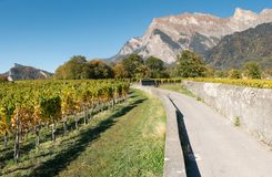 Countryside mountain landscape with golden leaf vineyards and rock walls in Switzerland in late autumn stock photo