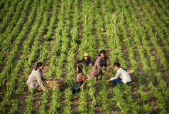 Countryside of Myanmar Royalty Free Stock Images