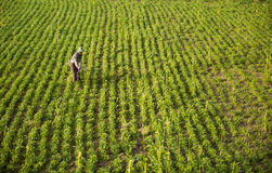 Countryside of Myanmar Royalty Free Stock Photos
