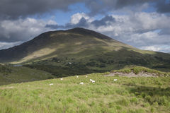 Countryside near Molls Gap; Killarney National Park Royalty Free Stock Photography