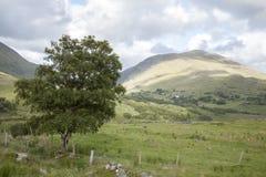 Countryside near Molls Gap; Killarney National Park Stock Photos