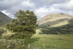 Countryside near Molls Gap; Killarney National Park Stock Image