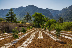 Countryside near Soller Royalty Free Stock Photos