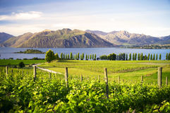 Countryside In New Zealand Royalty Free Stock Photos