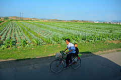 Countryside, North-Korea Royalty Free Stock Photography