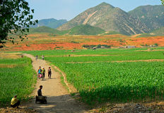 Countryside, North-Korea. Countryside scene with local person in North-Korea Royalty Free Stock Photo