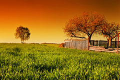 Countryside orchard landscape at sunset stock image