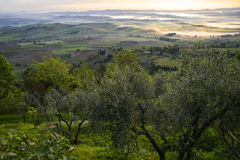 The countryside out Montalcino Stock Photo