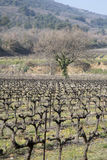 Countryside outside Bonnieux; Provence. France Royalty Free Stock Photos