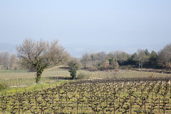 Countryside outside Bonnieux; Provence. France Stock Images