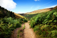 Countryside path of bracken Royalty Free Stock Photo