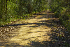 Countryside path Royalty Free Stock Image