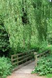 Countryside pedestrian wood bridge under a large weeping willow tree. Nobody, green, path, trail, sussex, england, scenic, nature, crossing, stream, creek royalty free stock photo