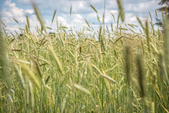 Countryside in Poland Royalty Free Stock Images