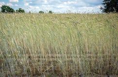 Countryside in Poland Royalty Free Stock Photos