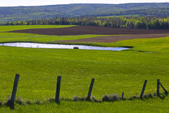 Countryside Pond Fence Field Cultivation Stock Photography