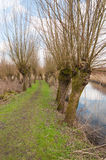 Countryside with a reflecting stream and bare pollard willows. Stock Photo