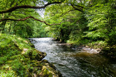 Countryside river. Royalty Free Stock Photography
