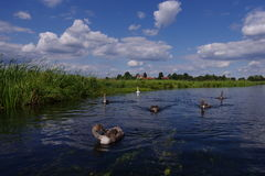Countryside. River, swimming swans, clouds on the sky Royalty Free Stock Image