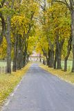 Countryside road in Royalty Free Stock Photos