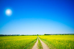 Countryside Road And Golden Field Of Rapeseeds. Royalty Free Stock Images