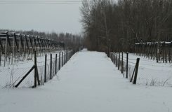 Countryside road with apple orchards on both sides covered with snow during winter.  royalty free stock photos