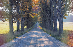 Countryside road in autumn, Europe Royalty Free Stock Photos