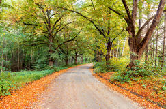 Countryside road in autumn Stock Image