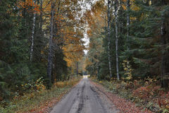 Countryside road in autumn Royalty Free Stock Photography