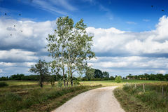 Countryside road with cranes Stock Photo