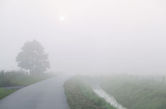 Countryside road in dense fog. Netherlands royalty free stock image